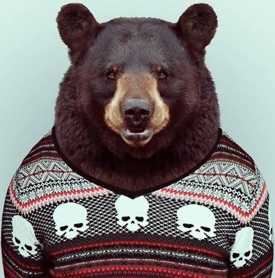 Фото медвежонка на аву